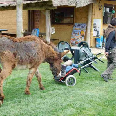 12. donkey eating boots copy